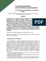 38 PURIFICACIÓN DNA PLÁSMIDO