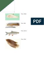 Koleksi Ikan Air Tawar