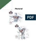 ejersicios de musculacion