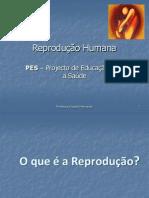 Anatofisiologia Dos Aparelhos Reprodutores