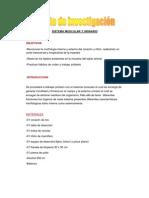 Sistema Muscular y Urinario