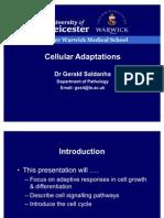 Cell Mechanism
