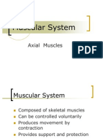 Axial Muscle