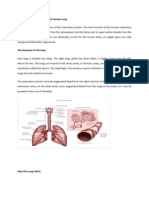 Anatomy and Physiology of the Human Lung