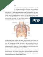 Anatomi Dan Fungsi Thorax