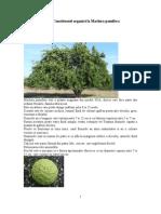 Constituenti Organici La Maclura Pomifera