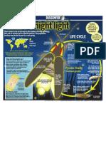 Nature's night light