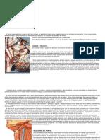 Nervio Neumogastrico y Vascularizacion Del Cuello