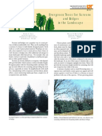 Evergreen Trees for Screens and Hedges in the Landscape Extremlym