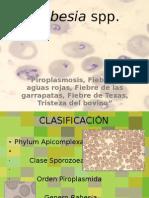 Babesia spp