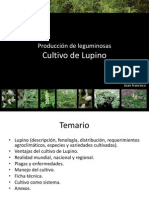 Cultivo de Lupino 1