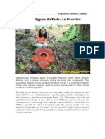 An Overview of Philippine Rafflesia