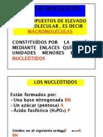 Acidos Nucleicos Ppt