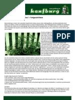 Mario Warner - Die Zucht von Cannabis Sativa für Fortgeschrittene