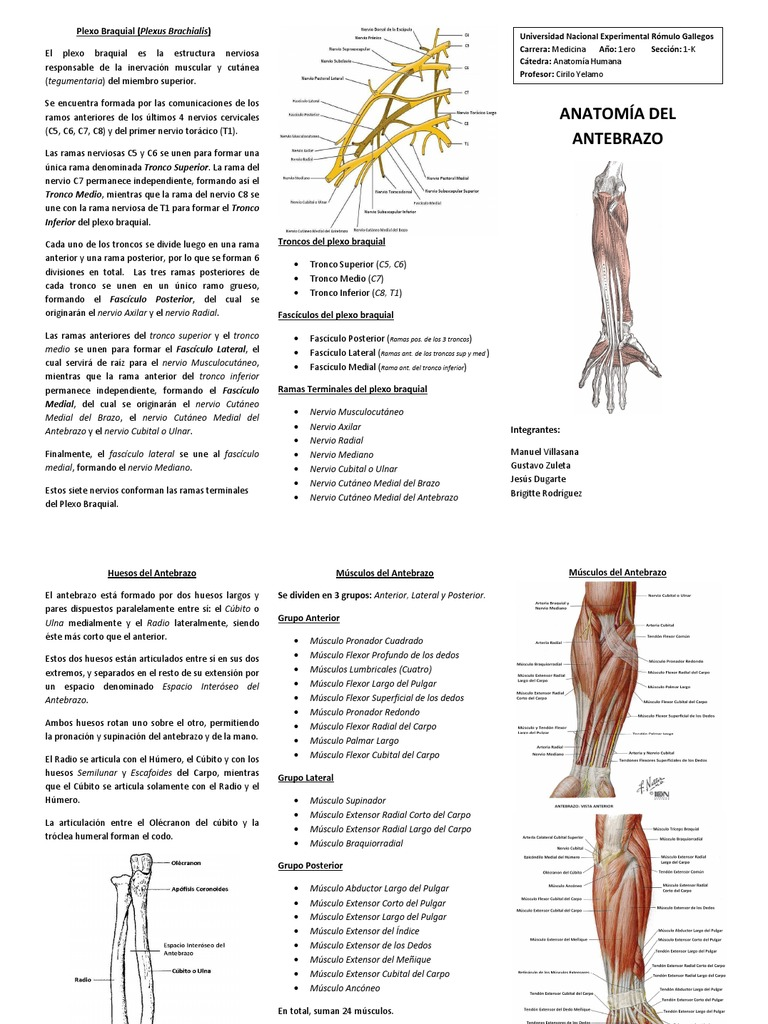 Tríptico_Anatomía