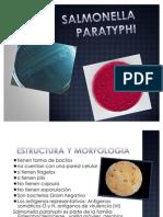 Salmonella Paratyphi