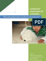 Recomendaciones Cachorro Samoyedo