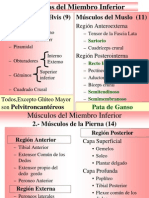 c) Miologia 1