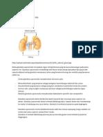 Glandula suprarenalis