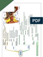 Anatomia Da Orelha - Esquema
