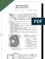 1º - Guía de estudio organelos