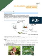 Maladies Cryptogamiques Guide Pommier Bio