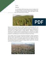 FyF CLXXV Deuda con los árboles