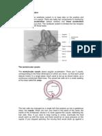 Laporan Fisio-The Vestibular System
