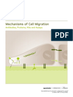 Mechanisms of Cell Migration