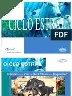 Ciclo estral_tcm84-107415