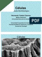 2. BLOG Estructuras y Funciones Celulares