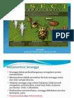 Metamorfosis_Serangga