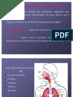 Curs 1 + Curs 2 Anatomia Aparatului Respirator