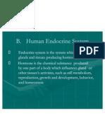 Human Endocrene System