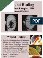 Wound Healing - JLampert