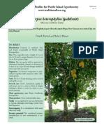 A.heterophyllus Jackfruit