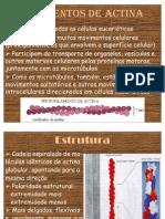 Filamentos de actina - Apresentação Citoesqueleto