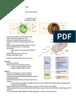 Handouts Immune Defenses F11