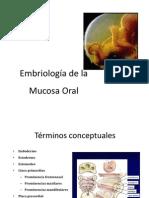 Embriologia de La Cavidad Oral