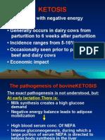مرض الكيتوزسس في المجترات