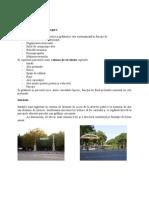 Curs.6-TLP (Tehnologia Lucrarilo Practice- Peisagistica)