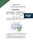 O Sistema Nervoso