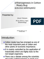 Study on Parthenogenesis on Cotton Mealybug