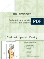 Abdomen and Cavity Grays