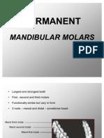 Permanent Mandibular Molars