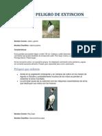 Aves en Peligro de Extincion