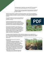 Agricultura y Ganaderia de Guatemala