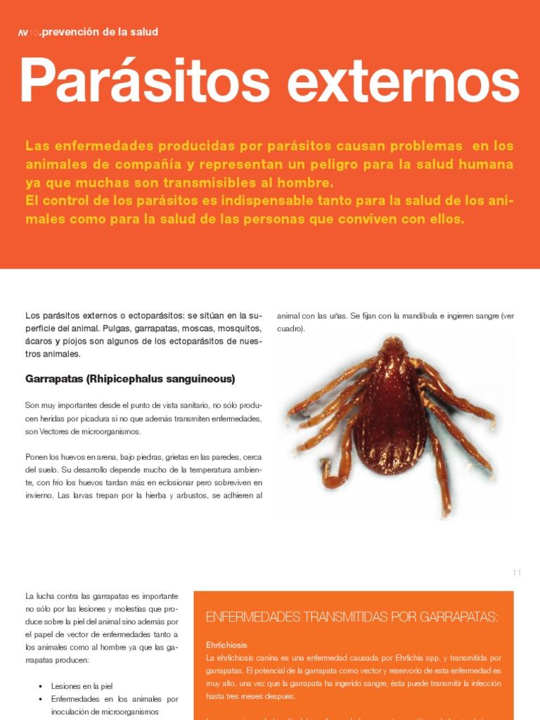 enfermedades causadas por ectoparásitos