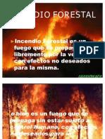 Presentacion de Forestal Para Riverorivero