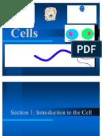 Cells Finale Project